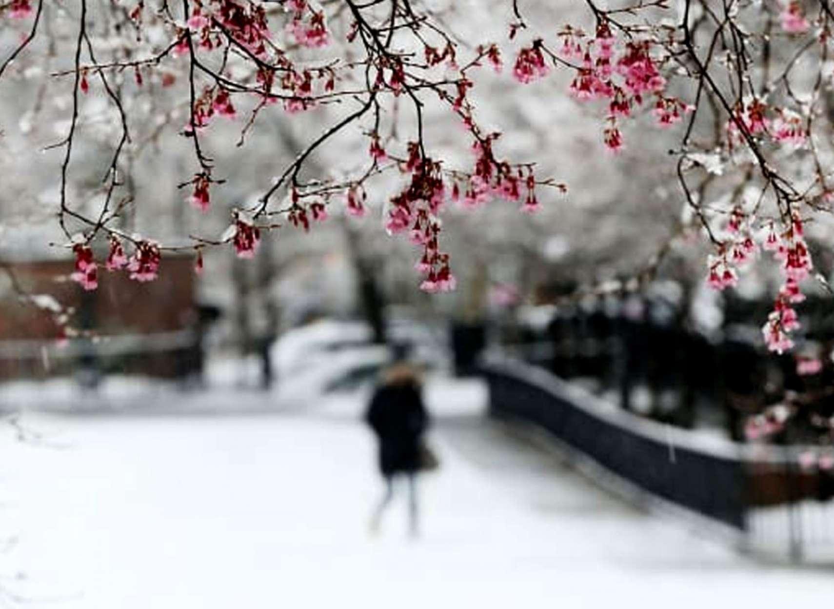 اخبار-تورنتو-سرمای-زیر-صفر-و-برف-آخر-همین-هفته-در-انتاریو-و-کبک
