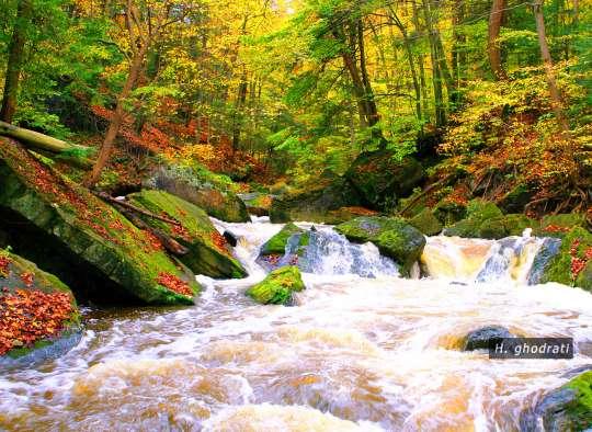 ورود پائیز به رودخانه