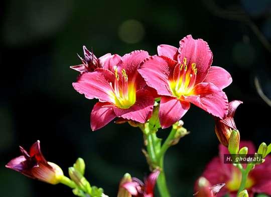 شاخه گل پُر رنگ